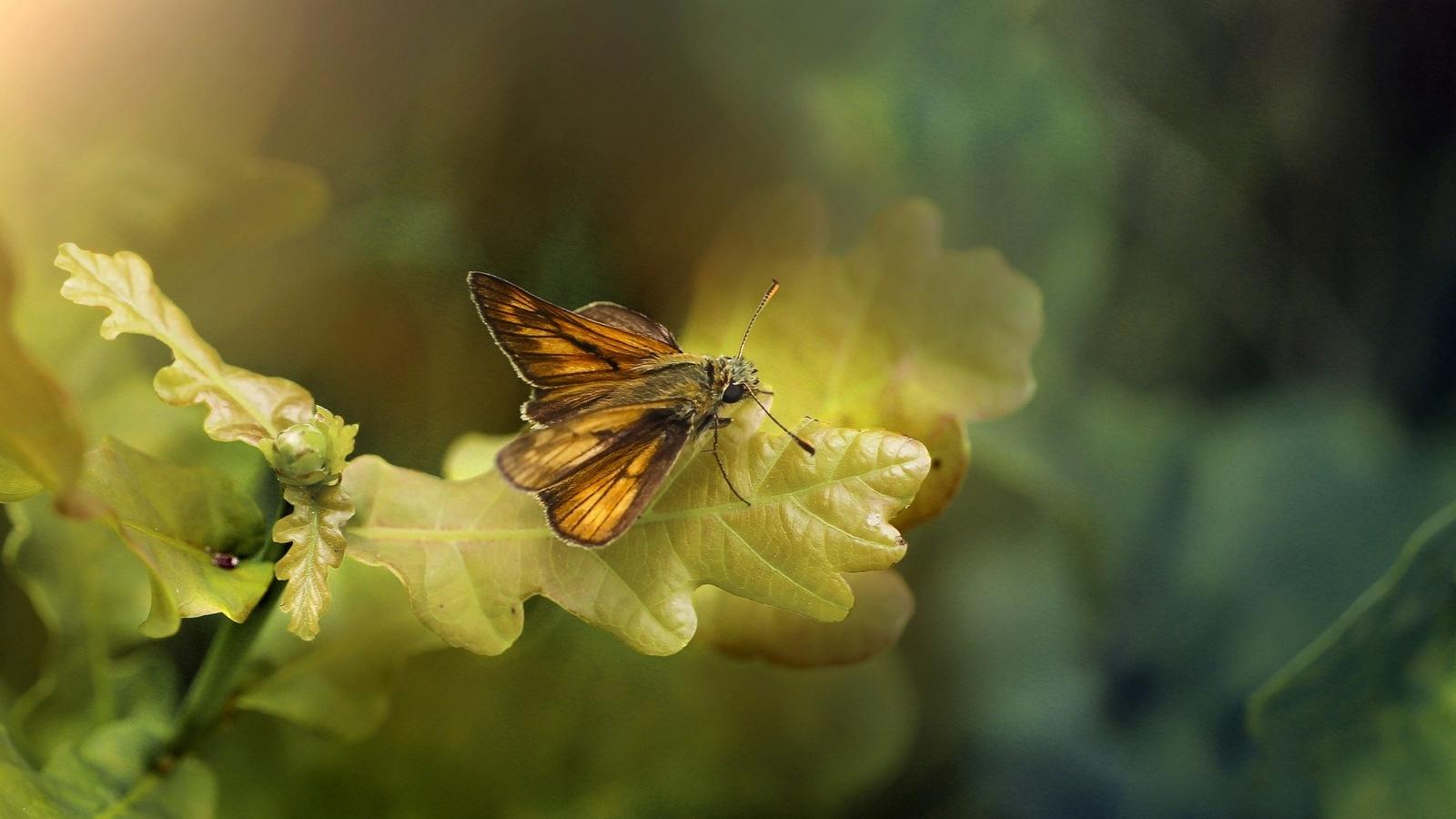 Farfalla arancione poggiata su una foglia gialla